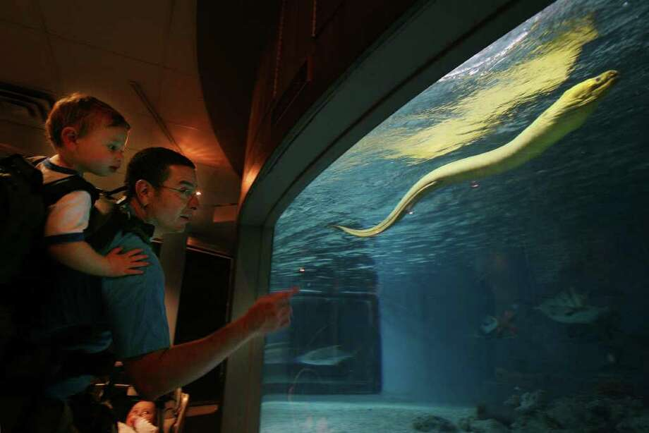 Ted Stanek and his son Jackson, 2, of Norwalk, marvel at a green moray eel at the Maritime Aquarium in Norwalk on Thursday, June 16, 2011. Photo: Brian A. Pounds / Connecticut Post