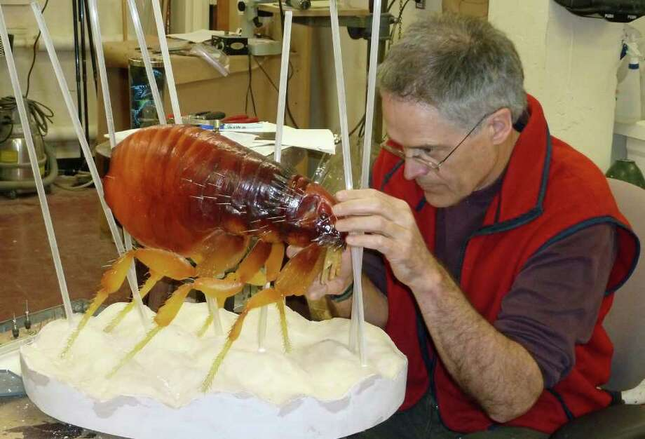"""The Yale Peabody Museum is hosting an exhibition, """"Invasion of the Bloodsuckers: Bed Bugs and Beyond"""" through Sunday, Jan. 8. Photo: Contributed Photo / Connecticut Post Contributed"""