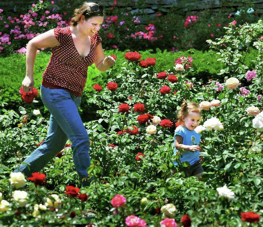 Theresa Belli  of Schenectady races her 2-year-old daughter through the Rose Garden in Schenectady's Central Park Tuesday June 21, 2011.   (John Carl D'Annibale / Times Union) Photo: John Carl D'Annibale / 00013613A