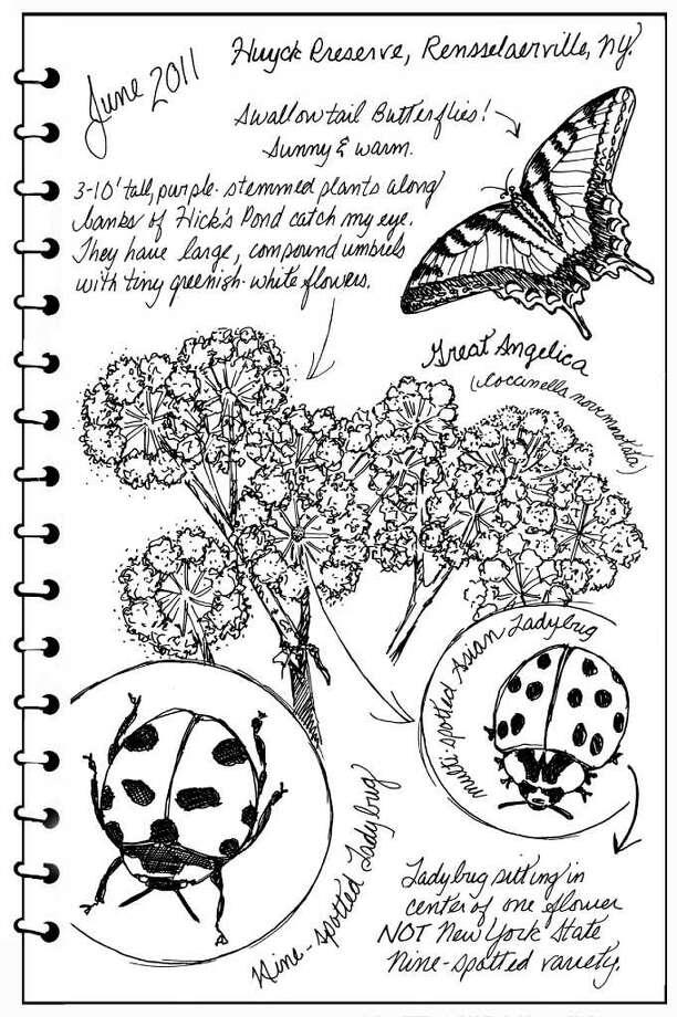 The nine-spotted ladybug.