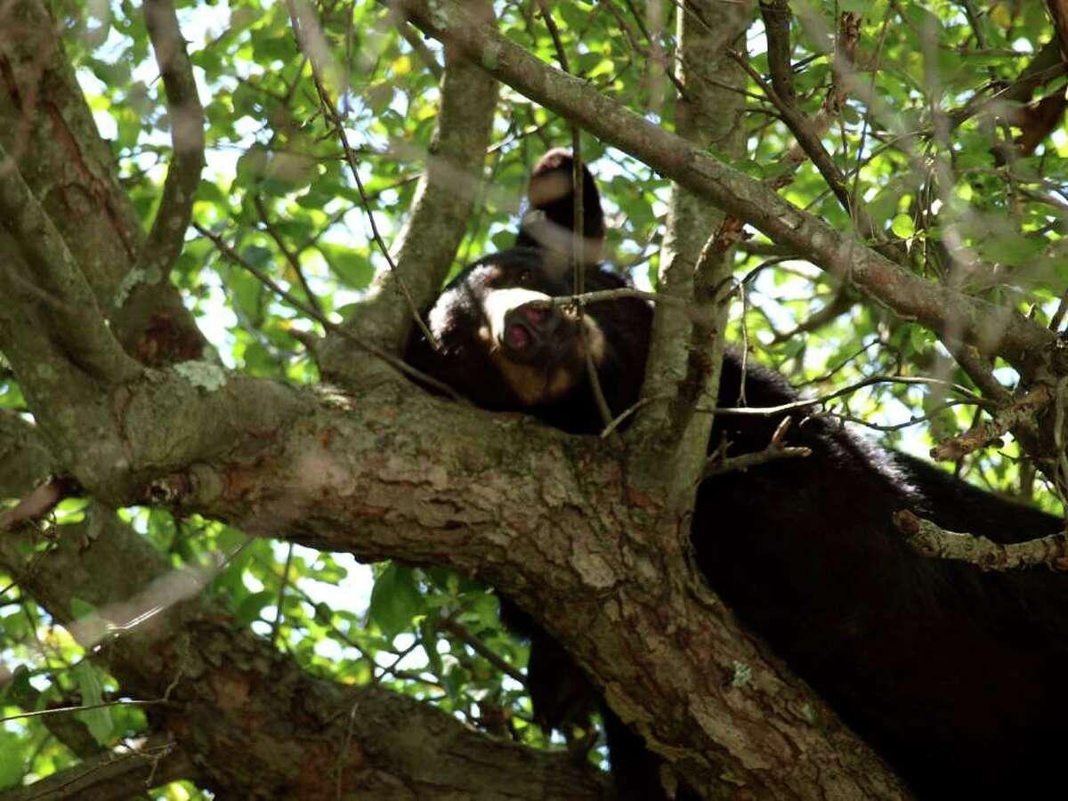 Brookfield 160 bear sightings (5/31/17-5/21/18)