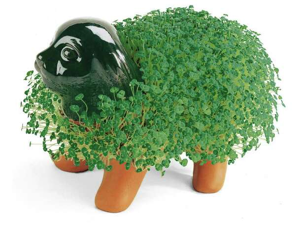 Chia Pet seeds are not for human consumption, but the company will be launching a new product of chia dietary supplements this summer. (Chia Pet image is a registered trademark worldwide by Joseph Enterprises, Inc.)