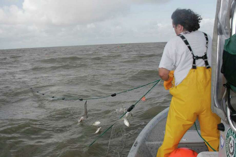 fisheries biologist retrieving a gill net in Galveston Bay: NET RESULTS - Data gathered through standardized gill net surveys by Texas coastal fisheries managers support what many anglers say they have seen: abundance of speckled trout in West Matagorda, San Antonio and Aransas bays have sharply declined over the past several years Photo: Shannon Tompkins, HC Staff / Houston Chronicle