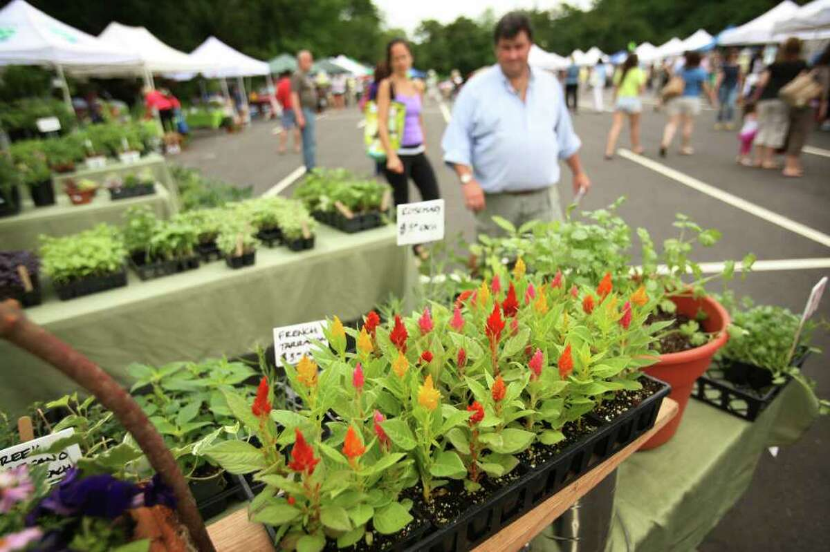 Opening day at the Westport Farmers Market on Imperial Avenue.