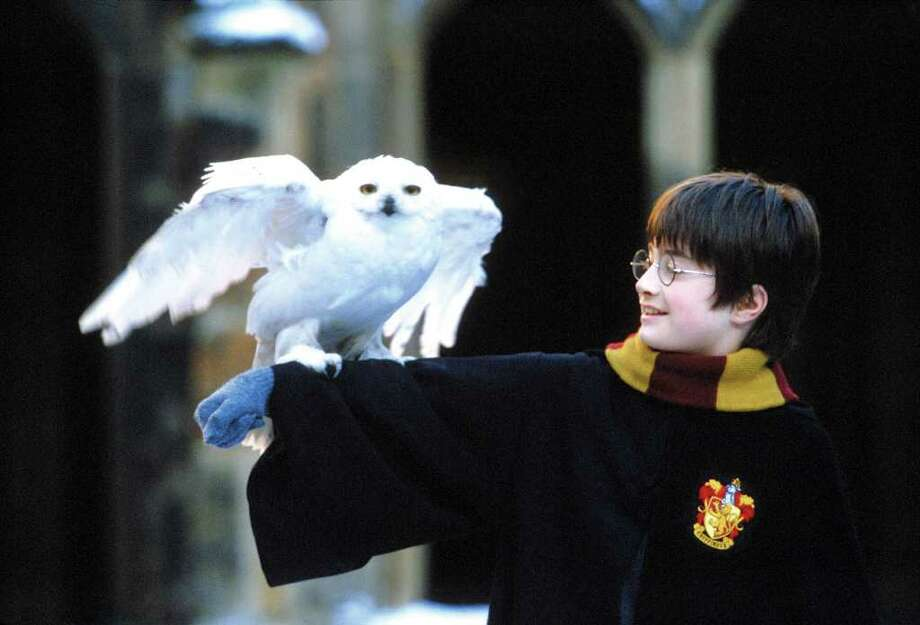 (KN4) KRT KIDS ELEMENTS STORY SLUGGED: POTTER-MOVIE KRT PHOTOGRAPH  (November 9) Harry Potter and his owl Hedwig in ``Harry Potter and the Sorcerer's Stone.'' (KRT) AP NC KD 2001 (Horiz) (lde) (Diversity) (Additional photos available on KRT Direct, KRT/NewsCom or upon request).  WHITE OWL   HOUCHRON CAPTION (11/29/2001):  Muggle fans of ``Harry Potter and the Sorcerer's Stone'' can't get an owl for a pet in the United States. But here's an alternative: The Audubon Adopt-a-Bird sponsorship program will let Potter buffs adopt an owl (or an eagle, hawk or falcon).     HOUCHRON CAPTION (01/04/2002):  Daniel Radcliffe portrays the title character in ``Harry Potter and the Sorcerer's Stone,'' the top-grossing film of 2001. Photo: HO / WARNER BROS.
