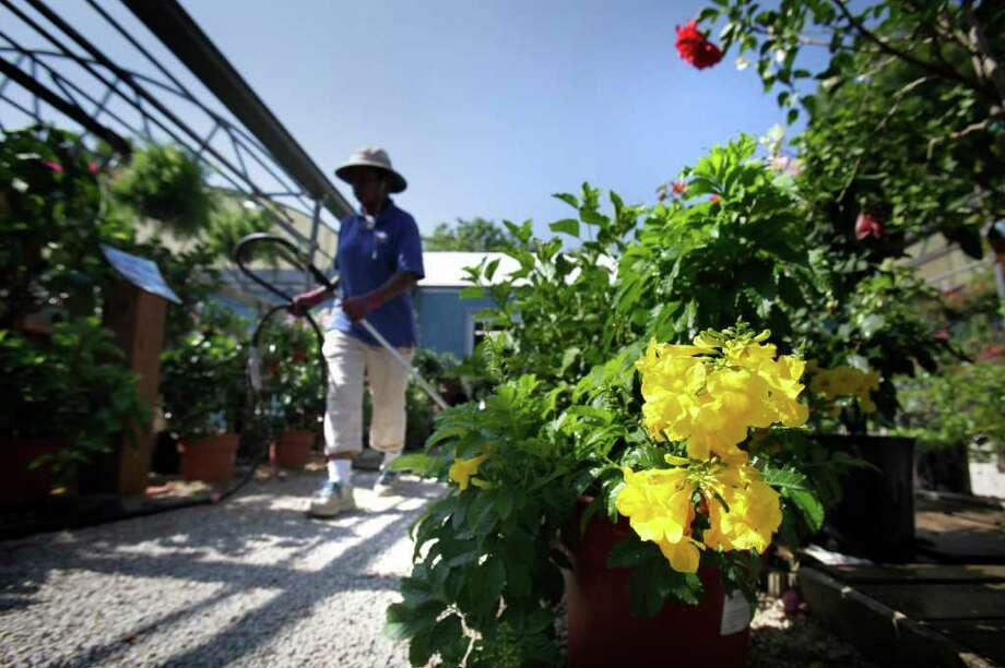 Mia Freeman waters plants at Rainbow Gardens on Bandera Road. At right is a hardy esperanza plant. BOB OWEN /rowen@express-news.net Photo: BOB OWEN, STAFF / rowen@express-news.net