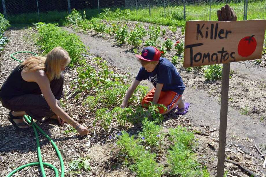 Joanne Keane and her son Tiernan work on weeding their row in the Victory Garden. They have planted squash, heirloom tomatoes and rhubarb on their row, which Tiernan named ìKiller Tomatos.î Photo: Stacy Davis
