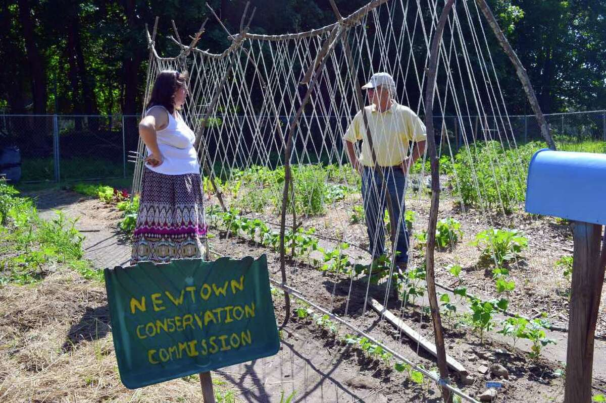 Newtown resident Sheila Sabin and Harvey Pessin chat in the Victory Garden, a community garden organized by Pessin. The Victory Garden is located on the Fairfield Hills campus and will provide vegetables for local food pantries.