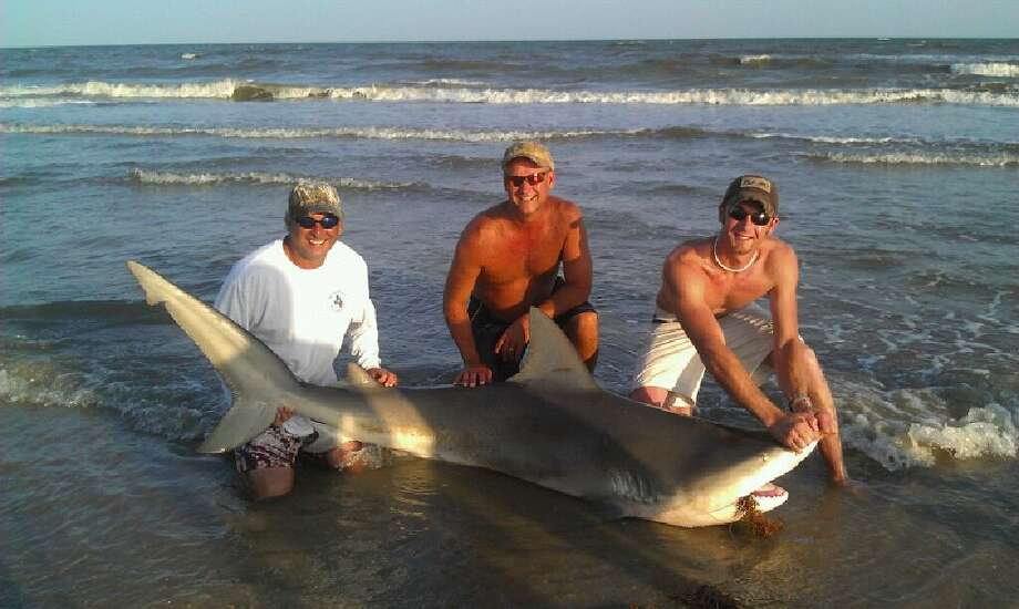 In this photo provided by Damian Diaz, from left, Diaz, James Sparks and Justin Lyons pose with an 8-foot bull shark caught Sunday, July 3, 2011 on Bolivar Peninsula beach. The 300-pound shark caught by Diaz and his family was released back into the Gulf after the group snapped a few photos to commemorate the catch. (AP Photo/Courtesy of Damian Diaz) Photo: HONS / Damian Diaz