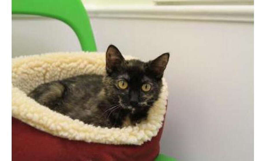 Name: Mona, Breed: