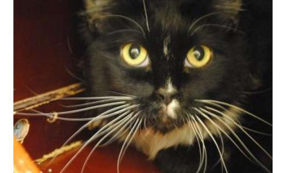 Name: Jackie, Breed: