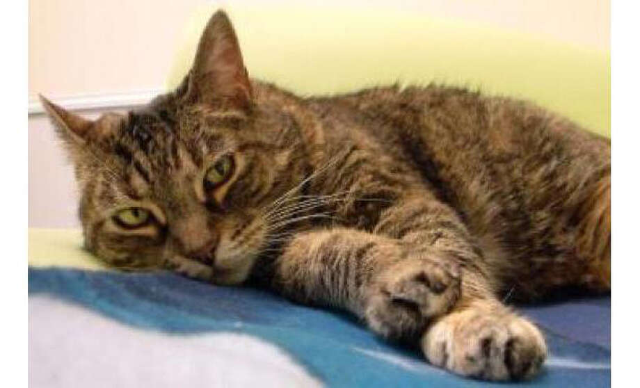 Name: Miley, Breed: