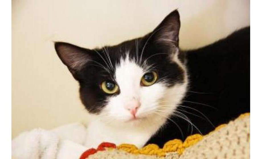 Name: Louise, Breed: