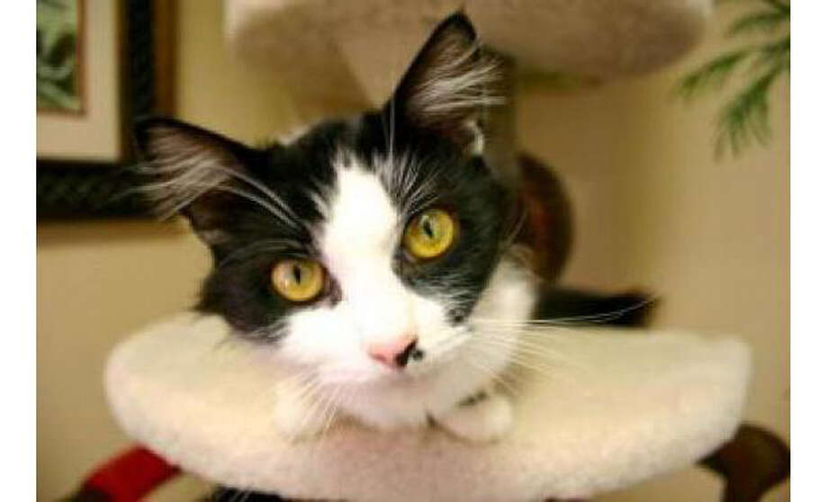 Name: Marilyn Monroe, Breed: