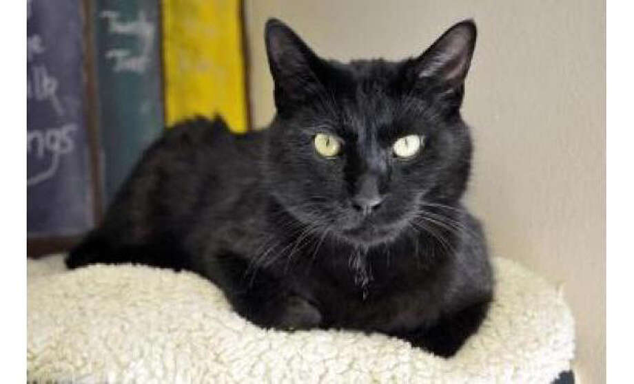 Name: Tucker