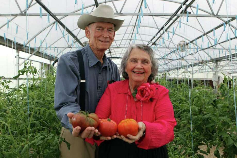 Charles and Thelma Cale, former owners of Color Burst Hydroponics, hold some tomatoes grown there by David Anderson. Photo: SAN ANTONIO EXPRESS-NEWS