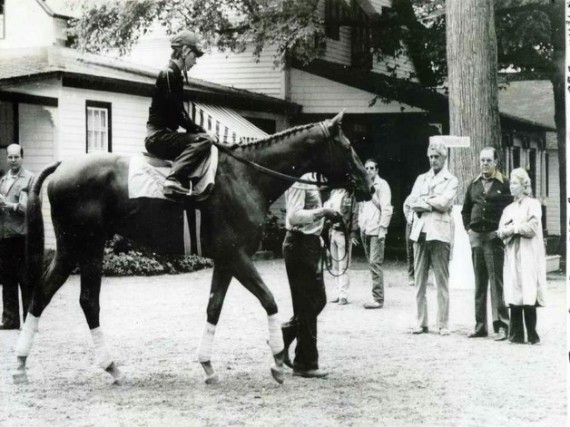 Affirmed, the last Triple Crown winner, is led towards the track on Aug. 6, 1978. He is being watched at the right by owner Louis Wolfson, trainer Laz Barrera and owner Patrice Wolfson. (Times Union Archives)