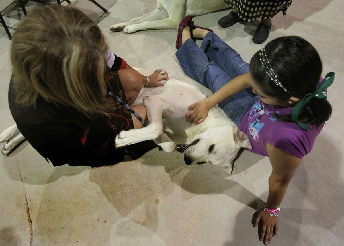 Callum the Anatolian shepherd gets attention from Denise Vertrees (left) of Kyle and Carrie Legler of San Antonio. The four-day River City Cluster of Dog Shows wrapped up Sunday, July 17, 2011, at Freeman Coliseum's exposition hall.