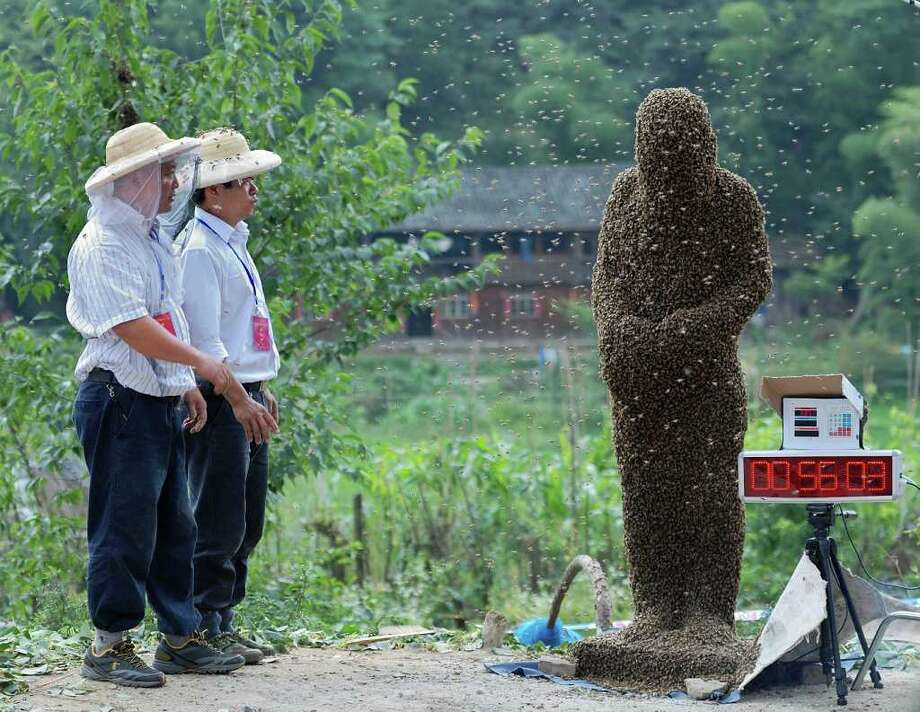 In this photo taken Saturday, July 16, 2011, a beekeeper wearing tens of thousands of bees, right, waits to be weighed during a bee bearding contest in Longhui county, Shaoyang, in central China's Hunan province. (AP Photo) CHINA OUT Photo: AP