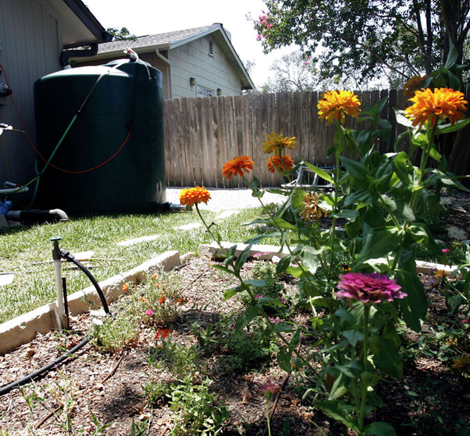 Collect rainwater to water plants and lawn. Photo: OMAR PEREZ / operez@express-news.net