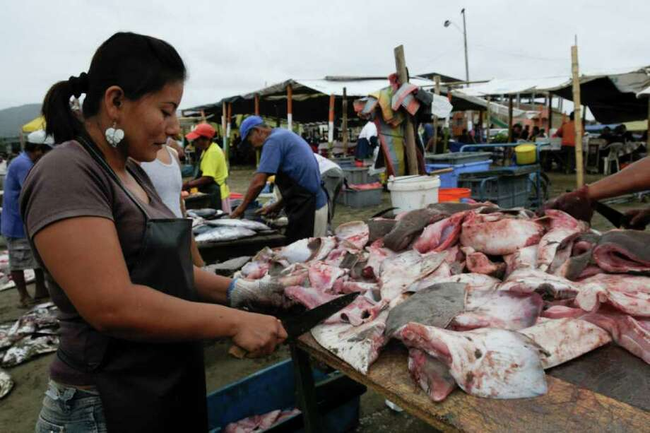 In this photo taken July 5, 2011, A woman cuts and cleans sharks' fins before exporting them to Asian markets in Puerto Lopez, Ecuador. Thousands of young sharks in danger of extinction are  regularly caught by fishing boats along the Ecuadorian coast to be sold mainly to Asian markets. A 2007 presidential decree authorized fishermen to sell shark meat and fins as long as the animals were caught by accident in fishing nets. Photo: AP
