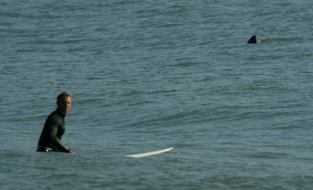 Tourists Record Great White Shark Devouring Seal Near