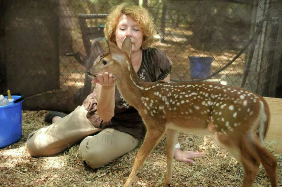Texas Wildlife volunteer Janette Winkelmann finishes her morning bottle feeding of the nine fawns in a pen at her Magnolia home. Freelance photo by Jerry Baker Photo: Jerry Baker, Freelance