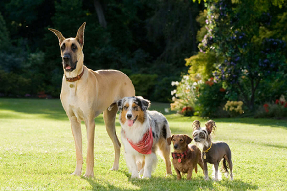 Marmaduke and friends in