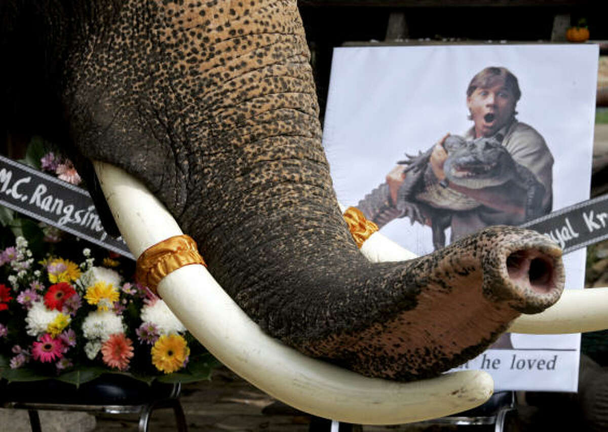 An elephant takes part in a memorial service for Steve Irwin at an elephant camp in Ayutthaya, Thailand. Irwin was known not only for his efforts to save crocodiles but also other vanishing animals around the world.