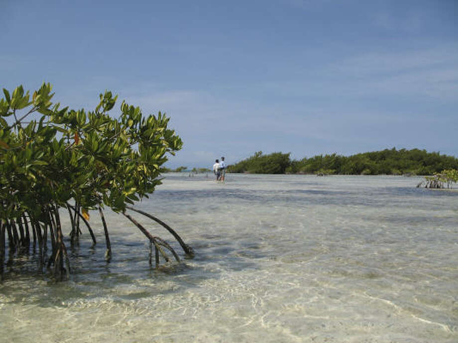Miles of white sand flats studded with mangroves provide classic bonefish water for waders at Los Roques off the coast of Venezuela. Photo: JOE DOGGETT, CHRONICLE