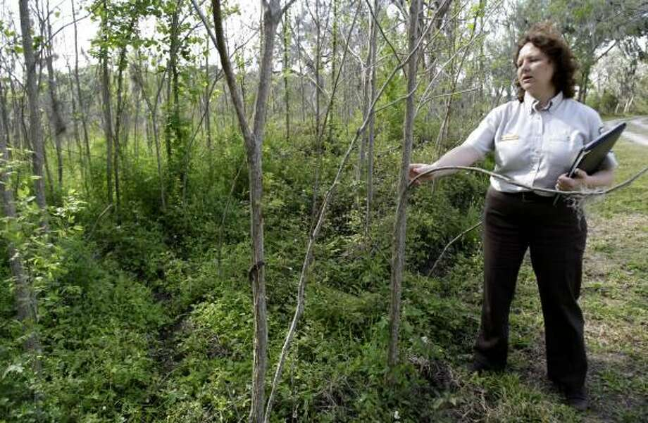 Jennifer Sanchez, project leader for the Texas Mid-Coast National Wildlife Refuge Complex, shows pecan trees protected by Reliant Energy's program to reforest nearly 1,200 acres in the Columbia Bottomlands forest. Photo: KAREN WARREN, CHRONICLE