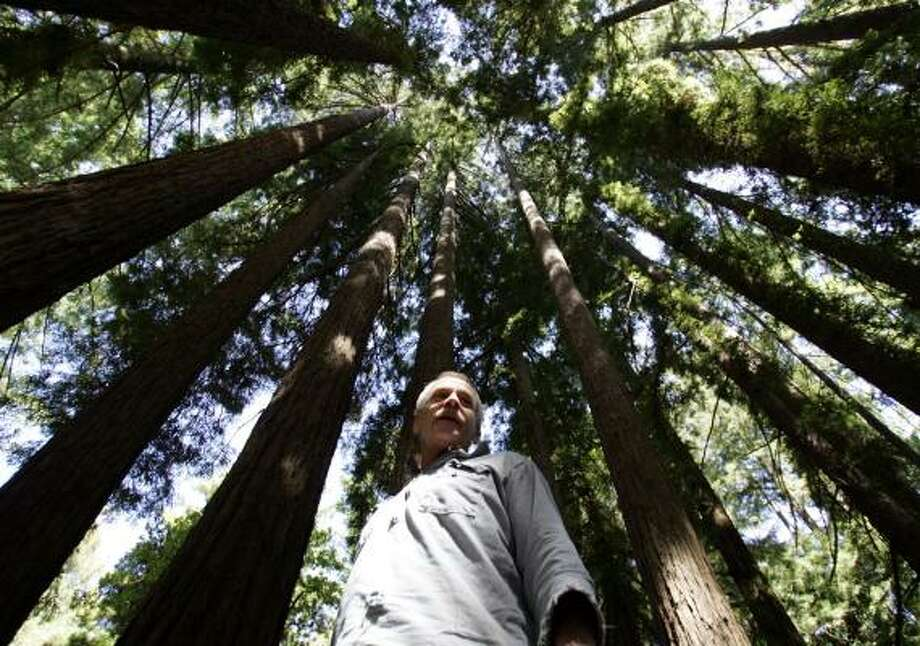 Steve Liebenberg, 58, stands among the Redwoods in the Cathedral Grove part of Bear Mountain in Felton, Calif. Photo: KAREN T. BORCHERS, SAN JOSE MERCURY NEWS