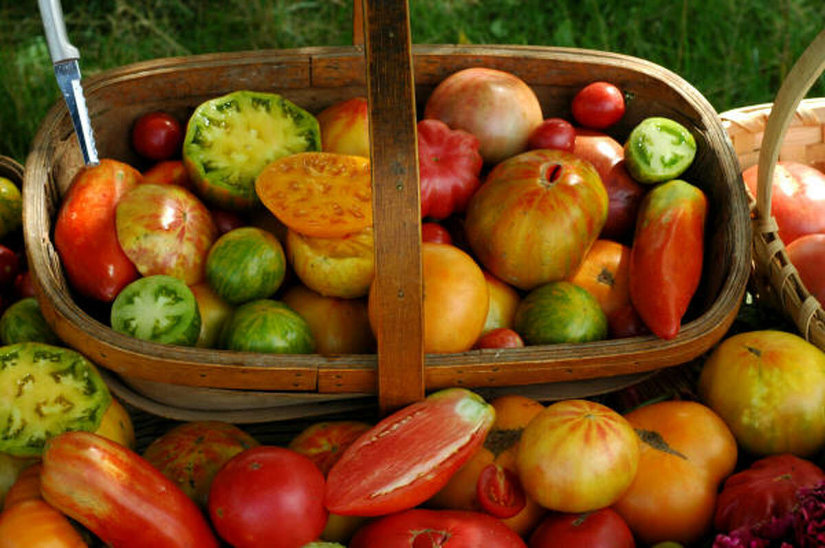 A basket of heirloom tomatoes.