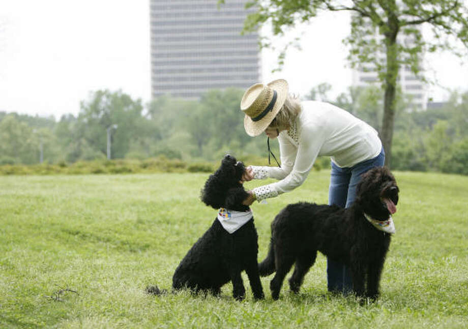 Joanne Herring plays with her dogs Chulo and Jezabelle in a park near home. Photo: KAREN WARREN, Chronicle