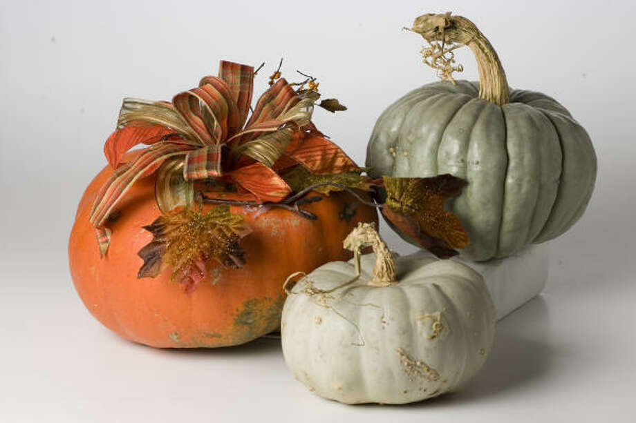 It's easy to create simple arrangements using traditional pumpkins, such as this large one from Cornelius. Colored pumpkins with beautiful stems such as the blue, deeply lobed Jarrahdale and the lighter Blue Lakota, from Central Market, are ornamental enough that they need little embellishment. Photo: Buster Dean, Chronicle