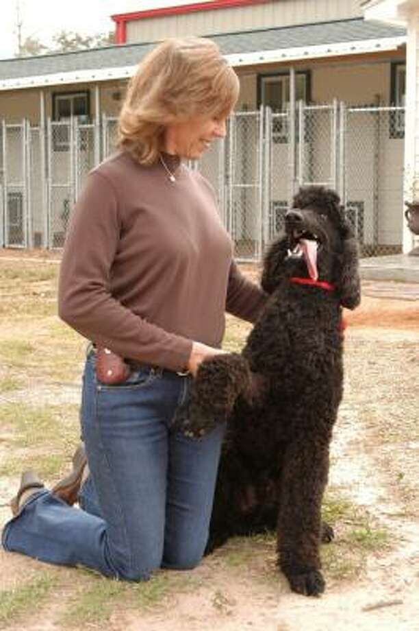 Gwinnette Peebles, owner of Poodle Rescue, spends time with a recently rescued poodle at the shelter. Photo: Bob Edwards, For The Chronicle
