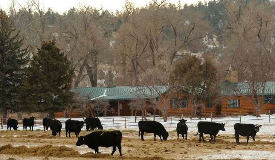 Cattle graze on a southeastern Montana ranch, where a Wyoming company seeks to drill. Photo: LARRY MAYER, THE (MONTANA) GAZETTE