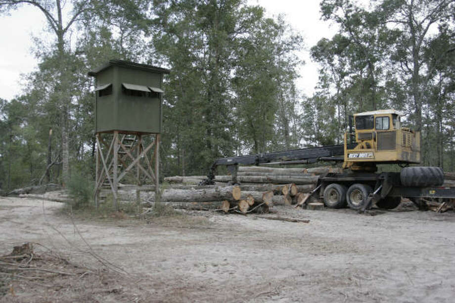 The meteoric loss of hardwood forests is one factor in the demise of squirrel hunting in East Texas. Photo: Shannon Tompkins, Houston Chronicle