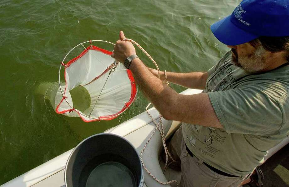 Mitch Wagener, professor of biology at Western Connecticut State University, brings in the netting that carries the samples that will tell researchers if zebra mussels in their larval stage are present in Lake Lillinonah on Thursday, July 21, 2011. Photo: Jason Rearick