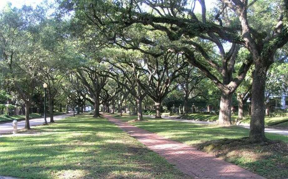 The neighborhoods are canopied by mature oak trees.