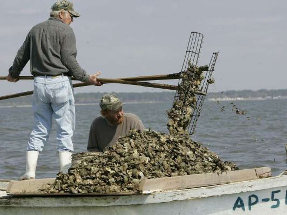 Frank Coulter loads oysters onto the growing pile as his son, Frank Jr., sizes and cleans them for market in March in Eastpoint, Fla. Atlanta's water usage is affecting oyster beds downstream. Photo: PHIL COALE, ASSOCIATED PRESS
