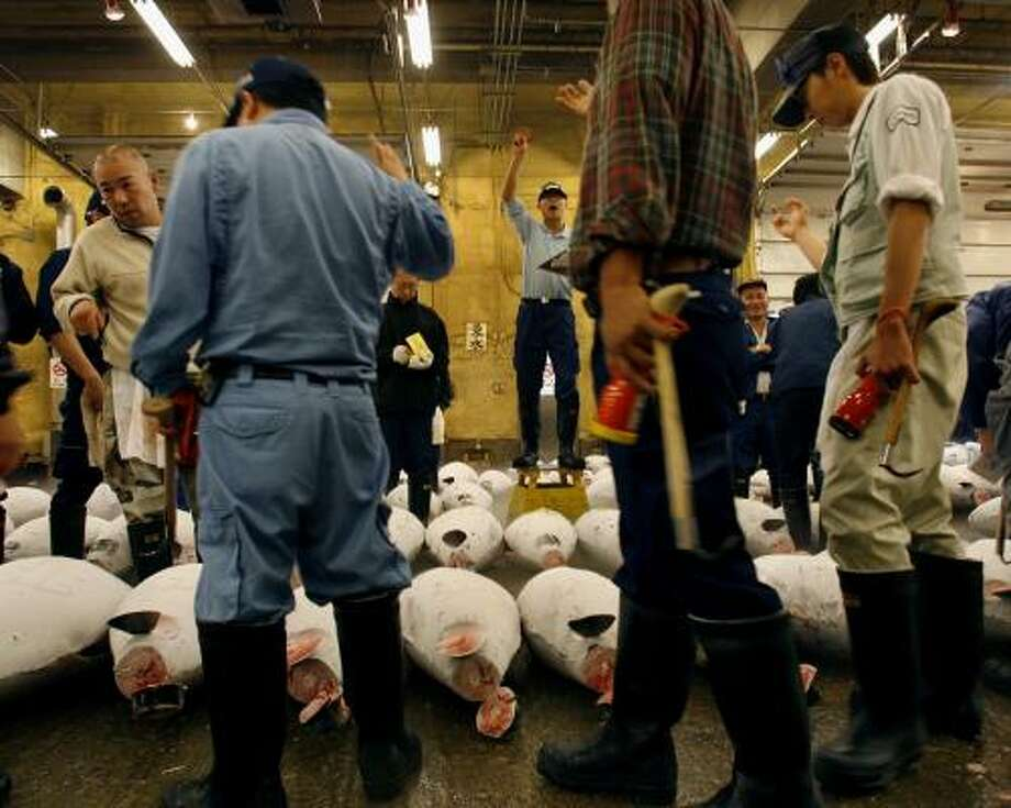 Bidders participate in a tuna auction at the Tsukiji fish market in Tokyo. A global summit in Japan this week addresses the declining tuna population. Photo: DAVIDE GUTTENFELDER, ASSOCIATED PRESS FILE