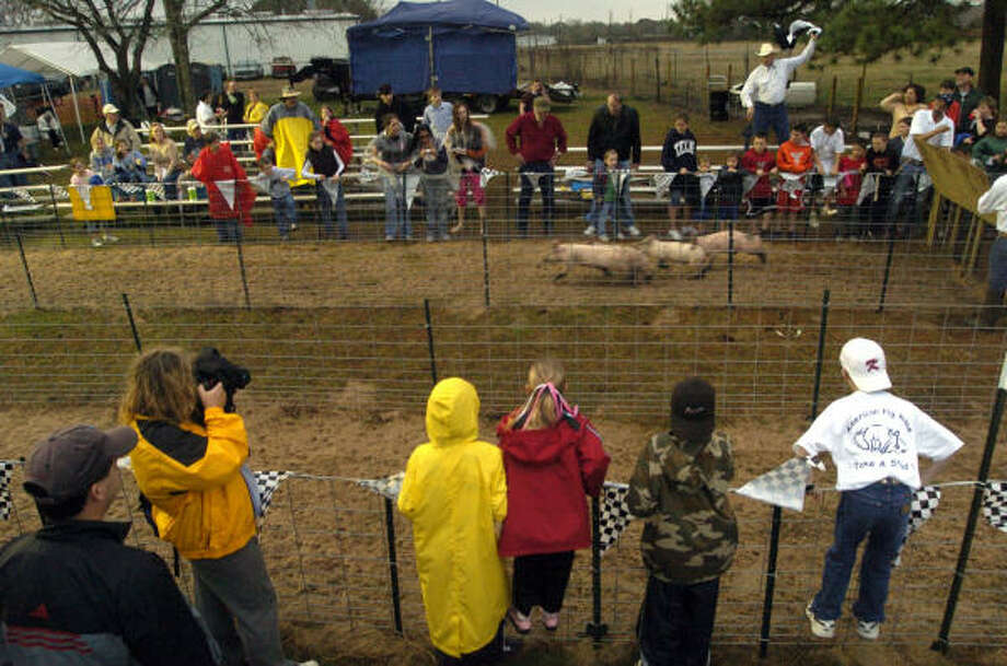 Craig Baker at 1918 Baker Road held a pig race Friday. About 100 people showed up for the event in the pouring rain. Photo: Johnny Hanson, For The Chronicle
