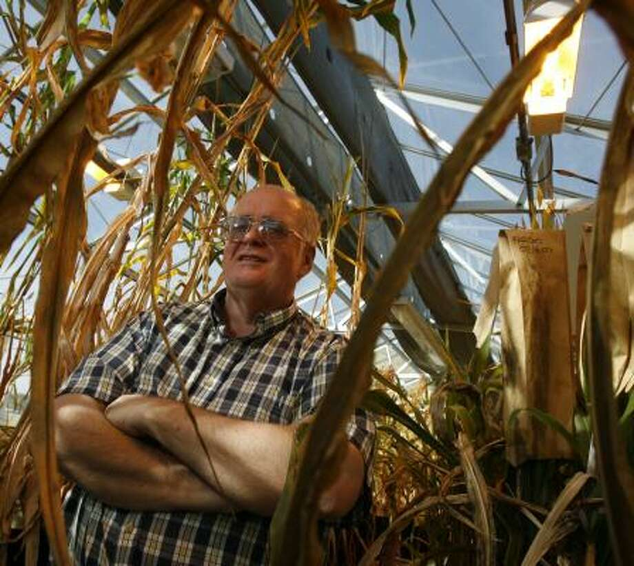 Nobel Peace Prize winner Bruce McCarl feels at home among sorghum plants in a research greenhouse at Texas A&M. Photo: MELISSA PHILLIP, CHRONICLE