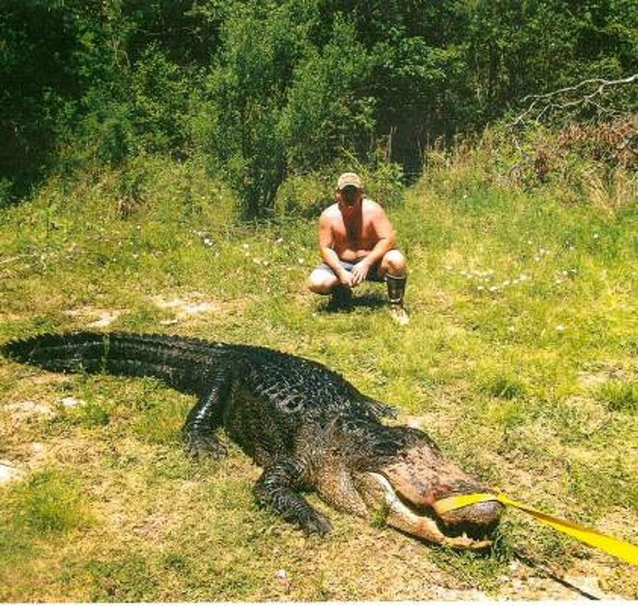 This photo, says the Harris County District Attorney's Office, was taken by one of the two men who have been charged with killing a 600-pound, 13-foot-long alligator in May. Photo: Harris County District Attorney