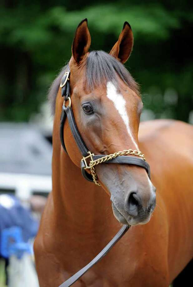 2011 Triple Crown contender Mucho Macho Man perks his ears while grazing in the barn area of the Oklahoma Training center in Saratoga Springs, N.Y. July 25, 2011.  (Skip Dickstein / Times Union) Photo: SKIP DICKSTEIN