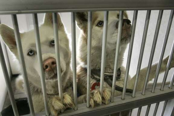 After homeowners could no longer afford their property, these dogs ended up at the Stockton Animal Shelter in California.