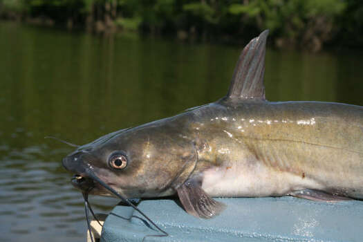 Fishing spots near houston stocked by tpwd houston chronicle for Stocked fishing ponds near me