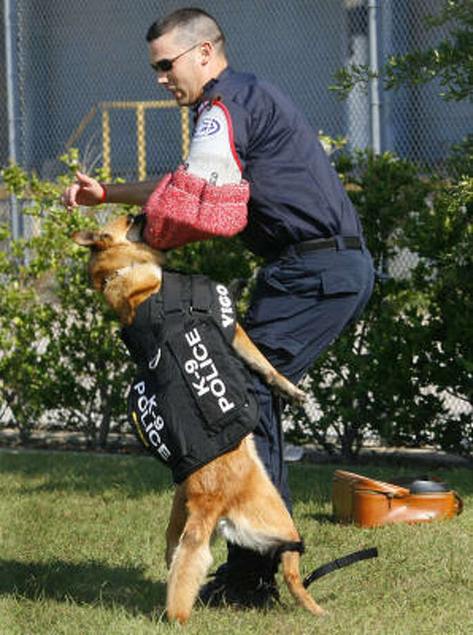 """Vigo, a Metro K-9 dog, demonstrates his skills against """"bad guy"""" Metro K-9 Officer Chris Obenland. Vigo is wearing a bulletproof vest for the first time Thursday morning at the downtown Metro headquarters after a non-profit organization donated nine vests to the department. Photo: Steve Ueckert, Chronicle"""