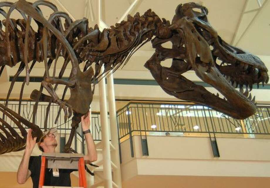 Stan the T. rex stands at the entrance of the Houston Museum of Natural Science facility in The Woodlands Mall. Photo: David Hopper, CHRONICLE FILE